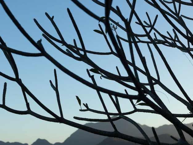 Zweige des kahlen baums, berg phousi, luang prabang, laos