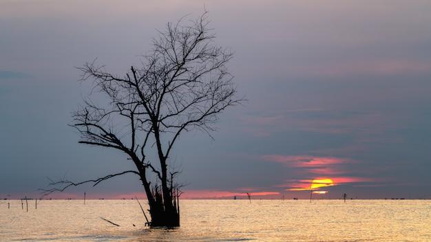 Zweige des toten baums im see mit sonnenaufgang