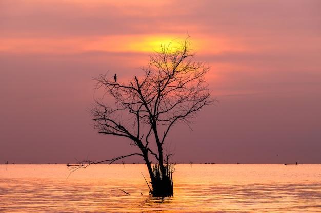Zweige des toten baums mit vogel im see mit sonnenaufgang
