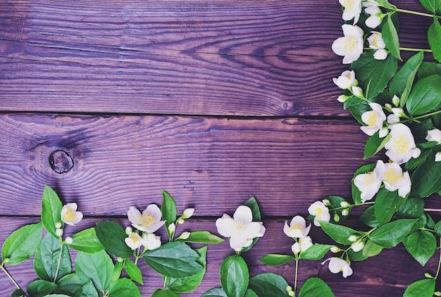 Zweige des weißen jasmins mit grünen blättern