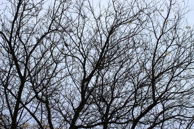 Zweige eines baumes ohne blätter