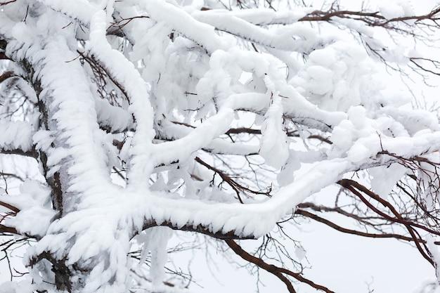Zweige eines schneebedeckten, eisigen baumes bei bewölktem wetter.