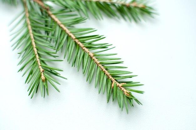 Zweige eines weihnachtsbaumes nahaufnahme auf einem neutralen