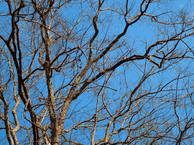 Zweige im hintergrund des blauen himmels