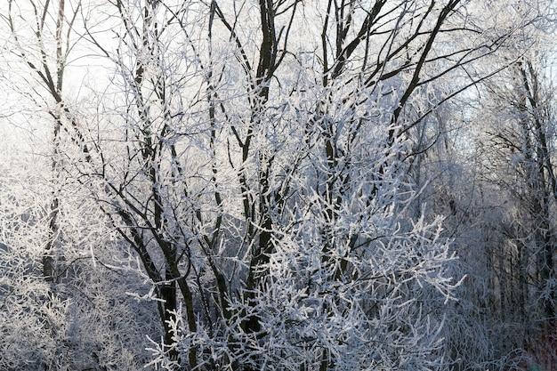 Zweige mit schnee und eis beleuchtet und durchscheinend vom sonnenlicht im morgengrauen, winter