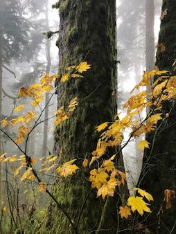 Zweige mit trockenen gelben blättern, umgeben von bäumen in oregon, usa