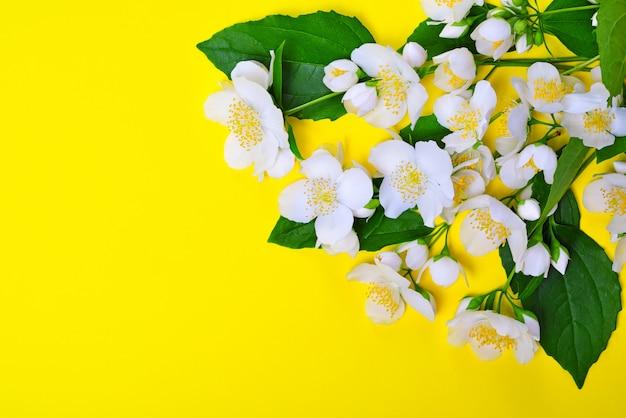 Zweige mit weißen jasminblüten auf gelb