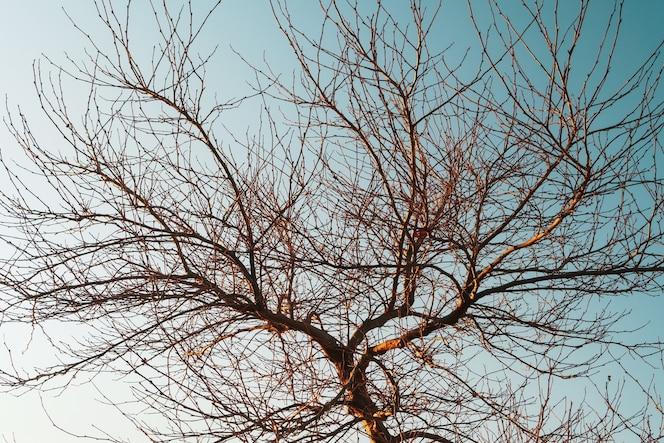 Zweige ohne blätter eines anmutigen baumes vor dem hintergrund eines blauen sonnenuntergangshimmels.