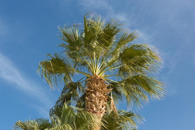 Zweige von dattelpalmen unter blauem himmel im sommer