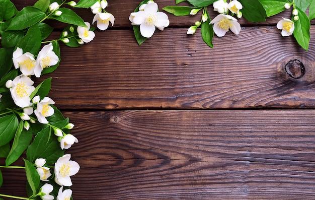 Zweige von jasmin mit weißen blüten