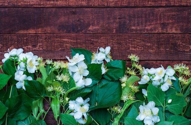 Zweige von jasmin und linden ast