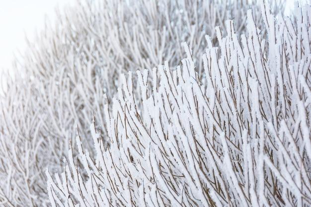 Zweige von sträuchern und bäumen, die aufgrund von starkem frost und akrtischer invasion mit frost bedeckt sind.