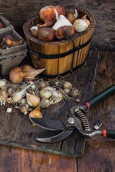 Zwiebeln und samen zum pflanzen