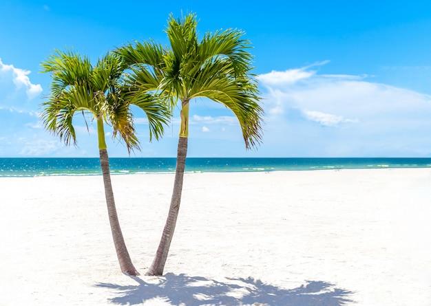 Zwillings-palmen in florida setzen, usa mit kopienraum auf den strand