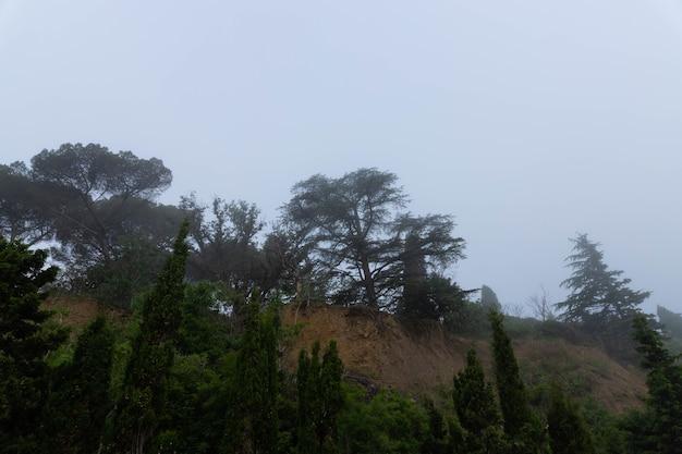Zypresse während des morgennebels. idyptische landschaft.