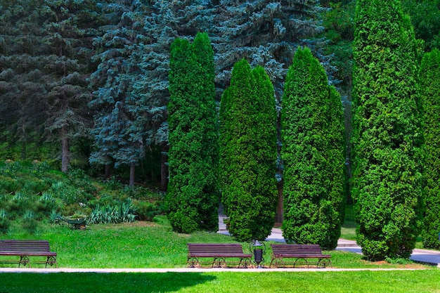 Zypressengasse im tal der rosen im naturpark