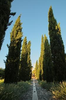 Zypressenreihen und fußgängerweg. pflanzen von grün