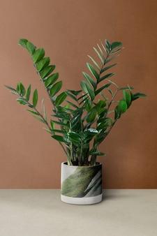 Zz-pflanze im grünen topf