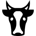 Cow face front