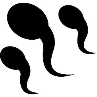 sperm clips