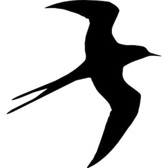 Swallow bird flying silhouette