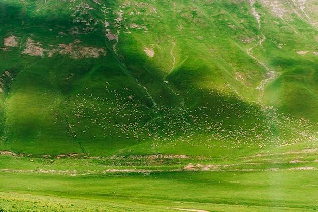 100万匹の羊がジョージア州コーカサスの緑の山を歩きます。野生の自然、山の風景の中の動物との素晴らしい景色。