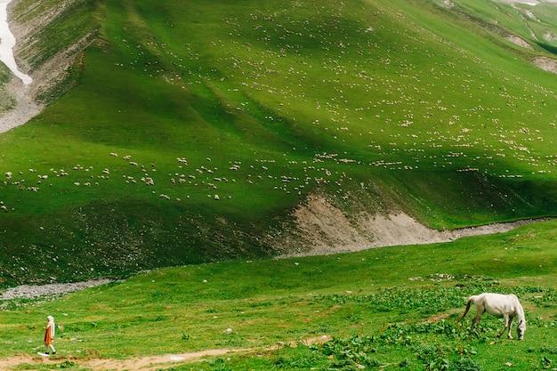 100万匹の羊がジョージア州の緑豊かな山々を歩きます。野生の自然の中で動物との素晴らしい景色。馬と少女の絵のように、彼らは別の方向に行きます。
