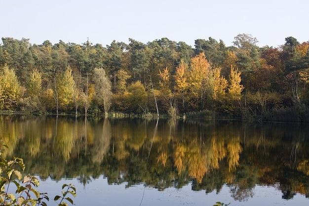 池のカエデが出現ミラーリング本10月の葉