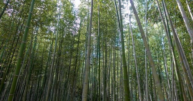 11月に京都の嵐山竹林
