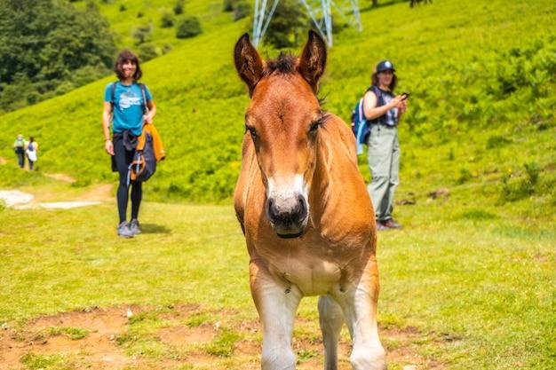 Двое молодых людей смотрят на маленькую лошадь. гора айзкорри 1523 метра, самая высокая в гипускоа. страна басков. восхождение через сан-адриан и возвращение через поля ольца