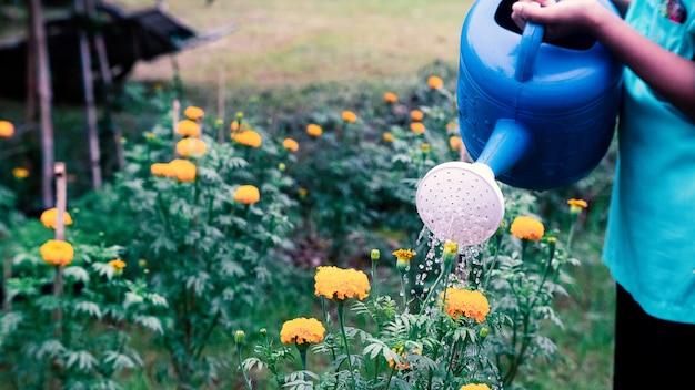 庭でマリーゴールドの花に水をまく人。16:9スタイル