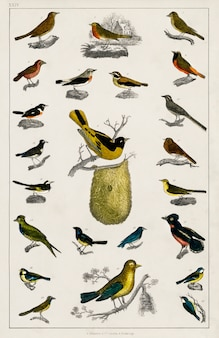 地球の歴史と生き物からの様々な鳥の収集(1820年)