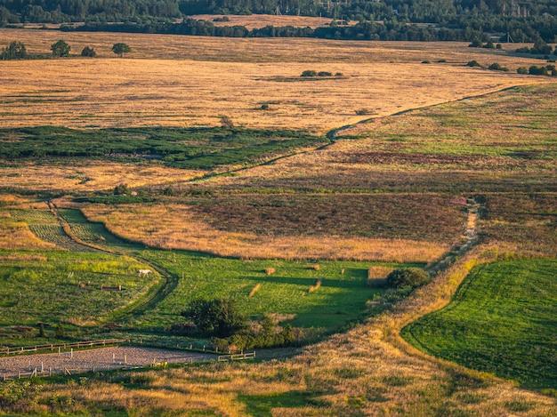 1つの白い馬と秋のフィールドの空中ドローントップダウンビュー。農業のコンセプトです。