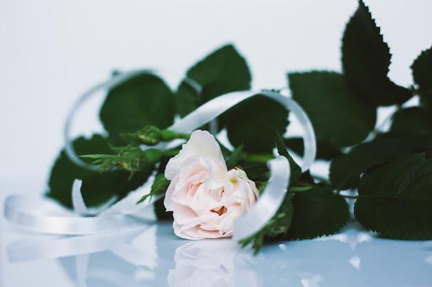 白い表面に1つの白いバラ