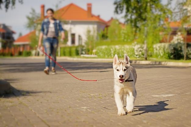 シベリアンハスキー犬の屋外の1つの小さなかわいい子犬