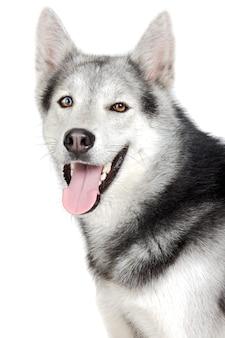 白い背景の上に1つの愛らしい犬