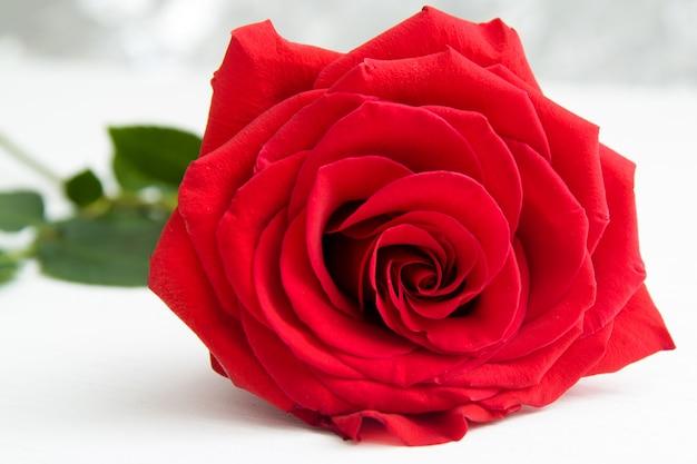背景のボケ味を持つ1つの赤いバラ