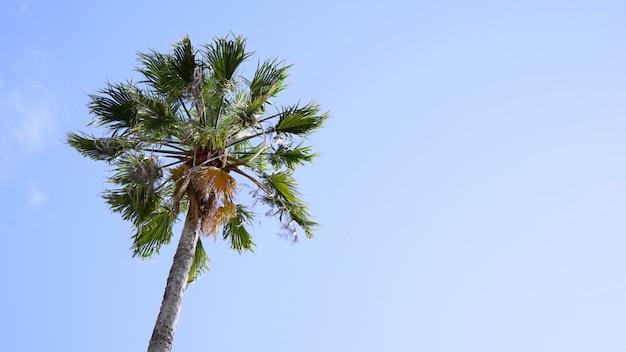 青い空を背景に1つのヤシの木