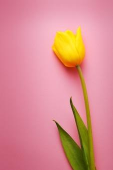 1つの美しい黄色のチューリップのクローズアップ