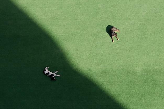 2匹の犬が緑の芝生で寝ており、1匹は日陰で、もう1匹は太陽の下で寝ています。上面図、空撮