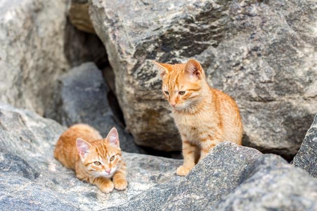 2つの黄色い子猫が外で遊んでいます。 2匹の猫が戦って石で遊ぶ