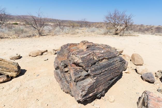 アフリカ、ナミビアのホリカスにある有名な化石の森国立公園にある石化した鉱化した木の幹。 2億8千万年前の森林、気候変動の概念