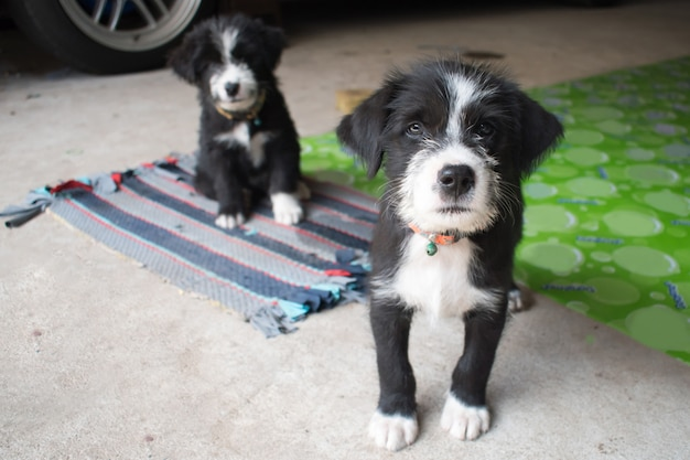 2 cute black puppies posing for pictures.