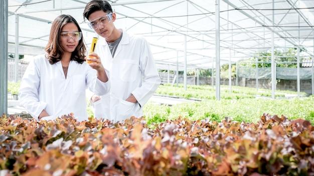 2 과학자들은 농부의 수경 재배 농장에서 야채 유기농 샐러드와 양상추의 품질을 조사했습니다.