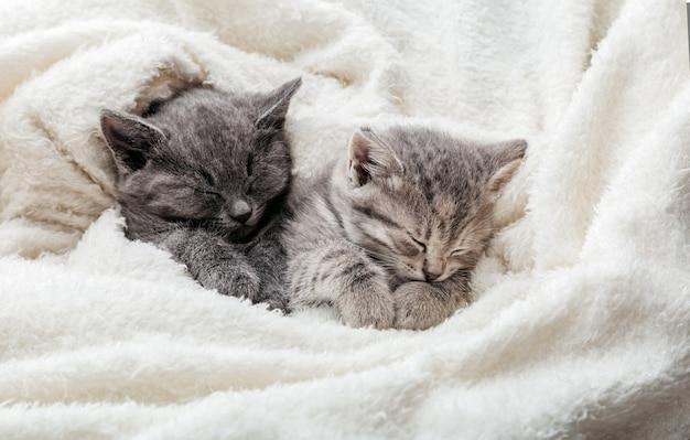 발이 있는 졸린 새끼 고양이 2마리는 흰 담요에서 편안하게 잠을 잔다. 가족 커플 고양이가 함께 쉬고 있습니다. 사랑 포옹에 두 회색과 얼룩 무늬가 아름다운 국내 고양이. 복사 공간이 있는 긴 웹 배너입니다.