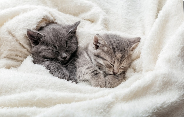 2 sleepy kittens with paws sleep comfortably in white blanket. family couple cats resting together. two gray and tabby beautiful domestic kitten in love hugging. long web banner with copy space.