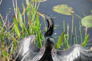 心配そうな鳥、フロリダ、2007年1月