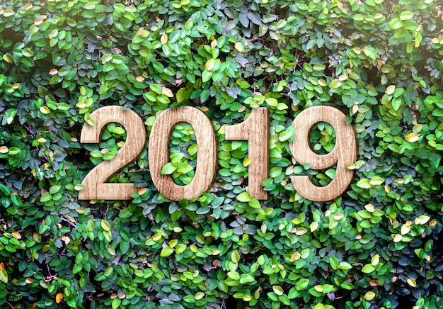 2019 happy new year wood texture number on green leaves wall background