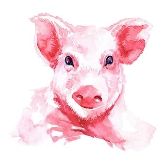 子豚の水彩画のイメージ。クリスマスカード。明けましておめでとうございます2019。