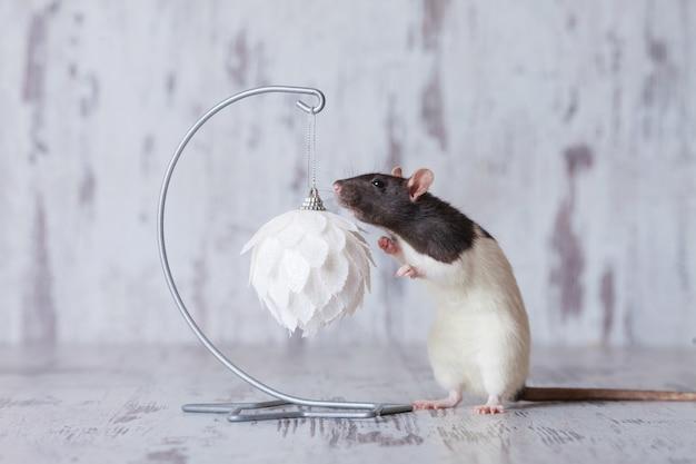 Рождественская крыса символ нового года 2020. год крысы. китайский новый год 2020. copyspace